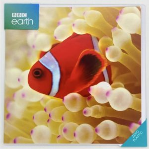 Clownfish in sea anemone