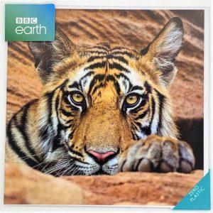 Tiger cub, Bandhavgarh National Park
