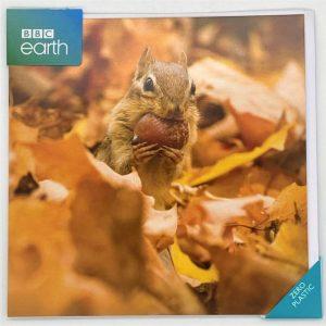 Chipmunk with an acorn
